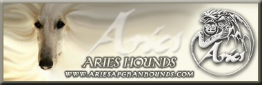 Aries Afghan Hounds